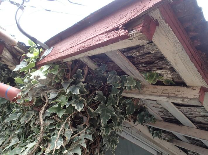 植物が絡まる納屋
