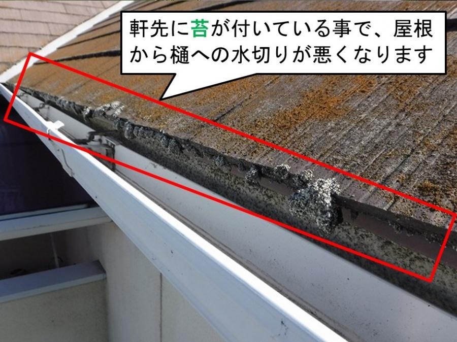 呉市カバー工法現地調査屋根上軒先苔