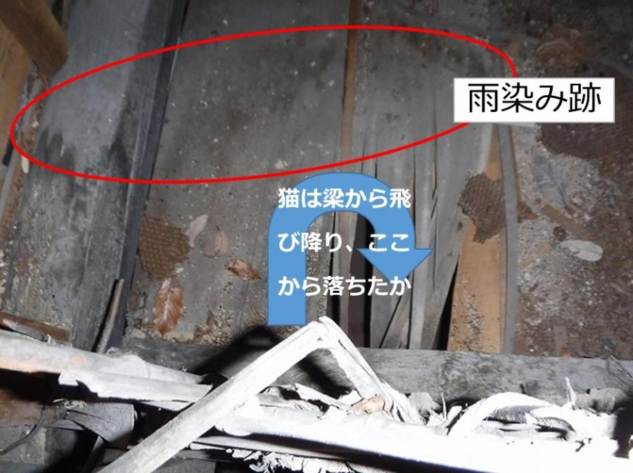呉雨漏り調査天井裏