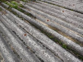 スレート屋根苔