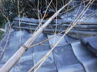 竹倒壊により隅棟破損
