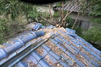 倒木による棟の崩れ