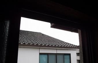 屋根の上に鳥