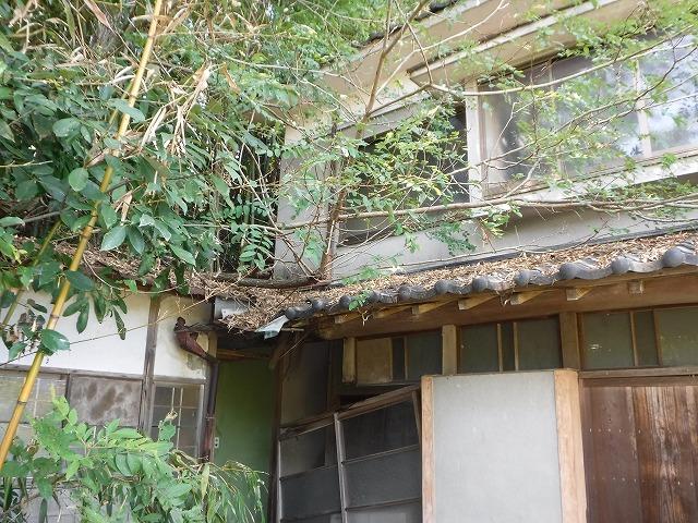 竹林から倒木