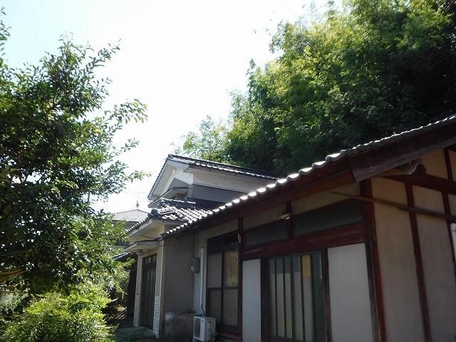 江田島市裏の竹林倒木