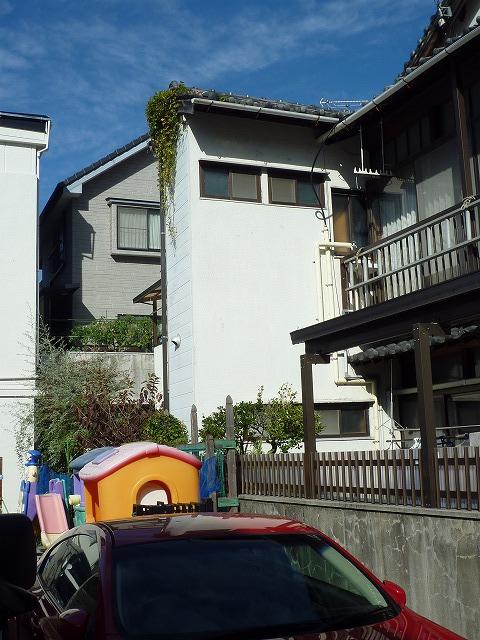草が生えている屋根近くの遊具