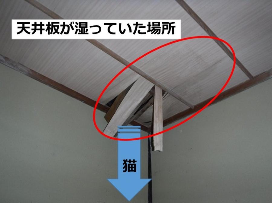 雨漏り天井から猫
