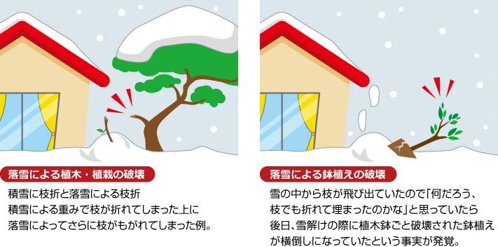 落雪による植栽への被害